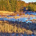 Emerging Marsh by Steve Harrington