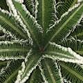 Emerging Palm by Brad Mullins