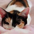 Emily, Too Precious  by Sharon Mayhak