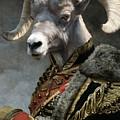 Emperor Jstor Jax by Matt Van Gorkom