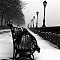 Empty Benches In The Snow by Debra Banks
