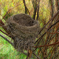 Empty Nest In Autumn by Cedric Hampton