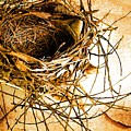 Empty Nest by Jan Amiss Photography