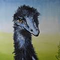 Emu 2 by Tom Perkowitz