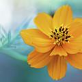 Enchanted Flower by Paul Sturdivant