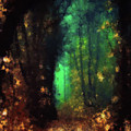 Enchanted Forest by Armin Sabanovic