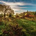 Enchanted Forest by Gordon Pusnik