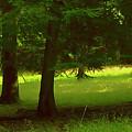Enchanted Forest by Linda Sannuti