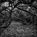 Enchanted Hau Forest by Heidi Fickinger