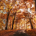 Enchanting Fall by Rima Biswas