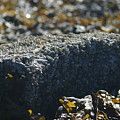 Encrusted Rock by Jeffrey Ober