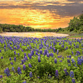 End Of A Bluebonnet Day by Lynn Bauer