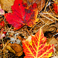 End Of Fall by Bob Bailey