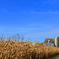 End Of Season Corn 2015 by Tina M Wenger