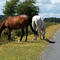 England - Wild Horses by Jeffrey Shaw