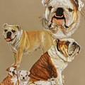 English Bulldog by Barbara Keith