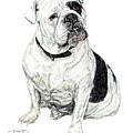 English Bulldog by Dan Pearce
