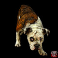 English Bulldog Dog Art - 1368 - Bb by James Ahn