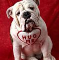English Bulldog by Garry Gay