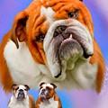 English Bulldog- No Border by Becky Herrera