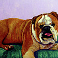 English Bulldog by Stan Hamilton