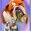 English Bulldog With Border by Becky Herrera