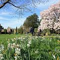 English Country Garden by Julia Gavin