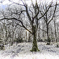 English Forest Snow Art by David Pyatt