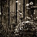 English Garden Noir by Susan Maxwell Schmidt