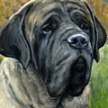 English Mastiff Black Face by Dottie Dracos