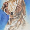 English Setter by Barbara Keith