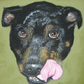 English Staffordshire Bull Terrier  by Louise Andersen