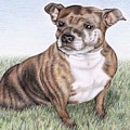English Staffordshire Terrier by Nicole Zeug