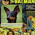 English Toy Terrier Art Canvas Print - Batman Movie Poster by Sandra Sij