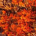 Enigma Orange by Chris  Riley