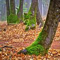 Enjoying The Forest Of Oak Run by Joyce Dickens