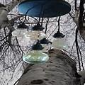 Enlightened Birch Trees by Lj White