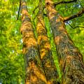 Enlightened Trees by LeeAnn McLaneGoetz McLaneGoetzStudioLLCcom