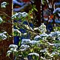 Enlightened Winter by Dale Chapel