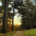 Enter Autumn by Jessica Jenney
