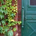 Enter Vine Door by Minaz Jantz