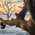 Charleston South Carolina Boneyard Beach Sunrise Scene  by Keith Briley