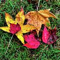 Entwined In Fall by Jeff Kurtz
