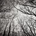 Entwined In The Sky by Mirko Chianucci