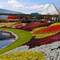 Epcot Gardens by Denise Mazzocco