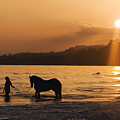 Equine Beach Time by Nick Sokoloff