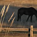 Equine Evening N. California by Michael Ziegler