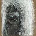 Equine Eye Detail by Terry Kirkland Cook