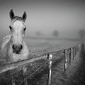 Equine Fog by Taken with passion