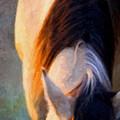Equine Glow by Nick Sokoloff